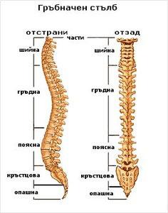 Гръбначните изкривявания