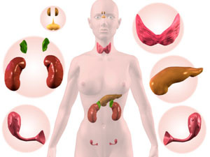 Справочник за хормоните