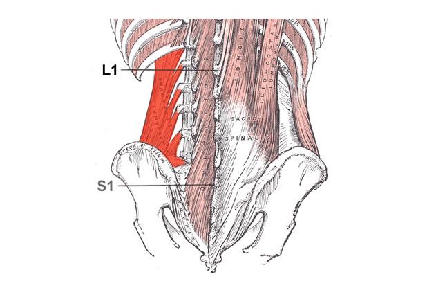 Квадратен поясен мускул Скритият причинител на болките в..