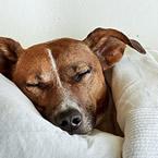 Сън и позите за спане